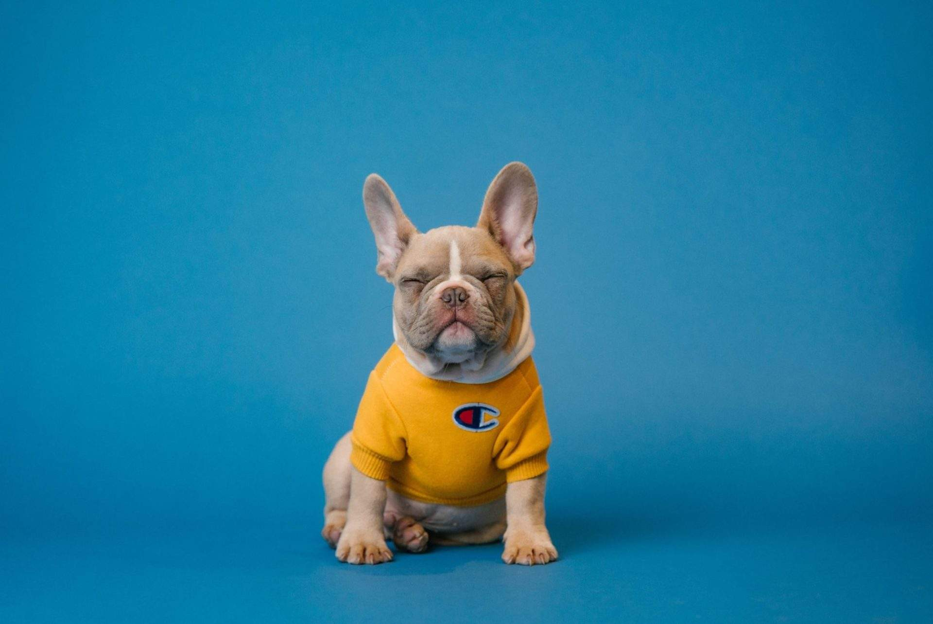 names for french bulldogs male